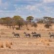 Préparer un voyage particulier en Tanzanie dans les meilleures conditions